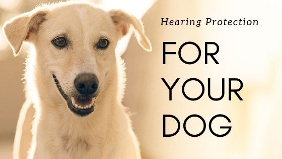 Hearing & Ear Protection for Dogs – Options & Reviews