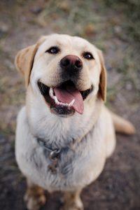 happy dog owns ear muffs
