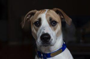 sad dog no hearing protection